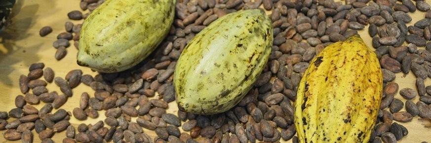Cacao - Chocolat